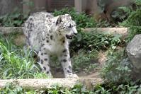 フク通信21 - 動物園に嵌り中