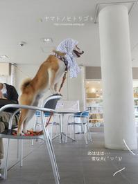 犬のいる家の、よくある光景【動画あり】 - yamatoのひとりごと