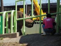 クロサイのペアが和歌山から熊本へ移動 - ごきげんよう 犀たち