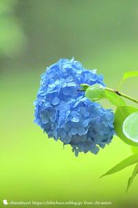 涼 - お花びより