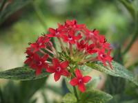 7月の庭Vol.1 - グリママの花日記