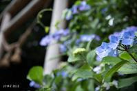 知和神社に咲く - 詩輝彩物語
