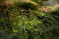 菊池渓谷-水鏡の中の森 - Mark.M.Watanabeの熊本撮影紀行