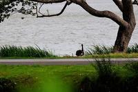 湖畔の昼下がり - MAKO'S PHOTO