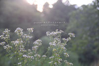 Flower Photograph #13 - psyuxe*旅とアトリエのあいだ