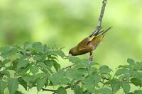 身近な野鳥 - 暮らしの中で