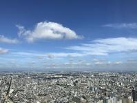 【今朝の青空】 - お散歩アルバム・・まぶしい夏空