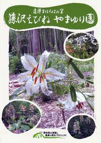 藤沢えびねやまゆり園の山百合 - あだっちゃんの花鳥風月
