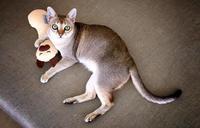 ㊗愛猫ディアモン君のBirthdey❣️ - 八巻多鶴子が贈る 華麗なるジュエリー・デイズ