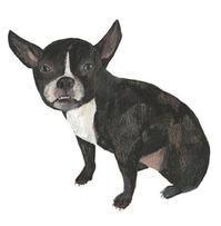 今日の絵「待ちぼうけ犬」 - vogelhaus note