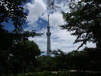 東京タワー隅田公園から臨む - エンジェルの画日記・音楽の散歩道