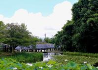 長岡天満宮の蓮の花 - 写真を主とした日記です
