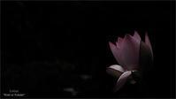 この花の季節VOL.01 - 君に届け