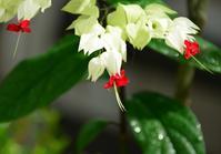 もののふに関わる名前の花たち - 写真でイスラーム