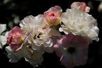 花のかたち - memory