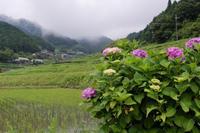 水田巡り - katsuのヘタッピ風景
