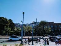 7月のサンフランシスコ - ラマがいない生活
