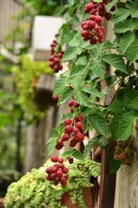 ブラックベリー - 花・tuzuri