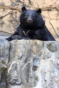 7月11日(水)ゆとりの時間 - ほのぼの動物写真日記