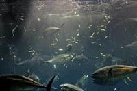 葛西臨海水族園~マグロ大水槽(アクアシアター) - 続々・動物園ありマス。