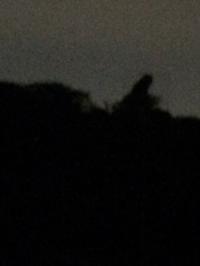 鎌倉にフクロウ⁈ - onomatopee kamakura  オノマトペ カマクラ
