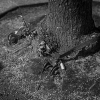根っこ強化ギプスを装着した街路樹 - Silver Oblivion