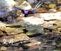 毎日が暑くなり、鳥達は毎日水浴びをしています、今日もサンコが見ている目の前で浴びてくれました、とてもダイナミックな浴び方で驚きです。 - 皇 昇