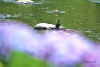 川でうたう - Bamboobooのひとりごと