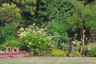 7/11夏の庭 - 「あなたに似た花。」