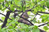 T森林植物園にて13 - 季節の映ろひ