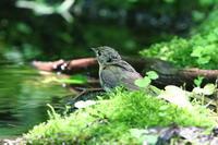 湖畔の森で - 今日の鳥さんⅡ