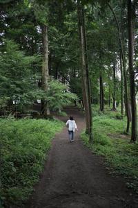 森の中へ - 空を見上げて