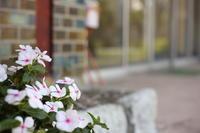 昭和レトロ、カメラ散歩 ① - ecocoro日和