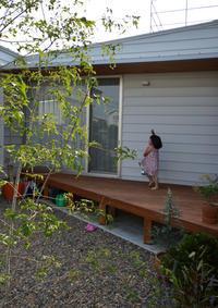 つくばH邸竣工3ヶ月のお庭の様子 - kukka  kukka