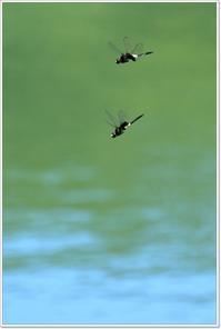 暑いったら(^_^;) - ハチミツの海を渡る風の音