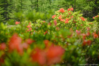 春を想う夏 - ひつじ雲日記