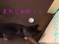 贅沢になったものです^^; - HAMAsumi-Life