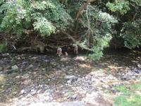 川で丸洗い - 漁・猟師(直売有)の主人と島で田舎暮らし~