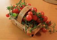 トマトの収穫 - 月の沙漠を
