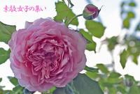 薔薇~ジュビリーセレブレーション - ♪Princess Craft  シニア素敵女子の集い