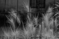 路傍の草 - フォトな日々