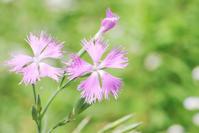 吉野ヶ里歴史公園の花 - デジタルフォトライフ