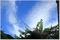 夏空とツバメたち - ハチミツの海を渡る風の音