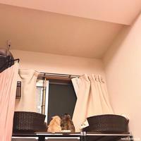 だれかいるよ! - 賃貸ネコ暮らし|賃貸住宅でネコを室内飼いする工夫