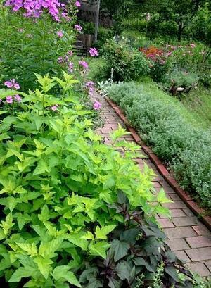 植物だって日除けがほしい。。 - 古民家と、、畑と庭とそのまた向こう