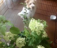 サロン開業に向け、ハーブの苗を取り寄せました。 - ローズ &ハーブガーデンの小さなおもてなしサロン ~ligare flora~