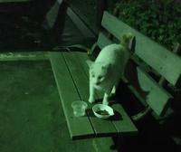 白猫二匹の優雅なお食事 - もるとゆらじお