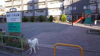 Vol.1362 殿町1丁目公園 - 小太郎の白っぽい世界