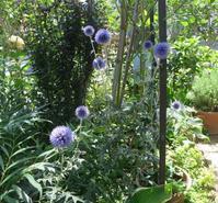 夏の花 - ひだまりの庭 ~ヒネモスノタリ~