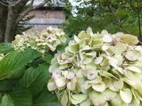 梅雨明けの庭 - アオモジノキモチ